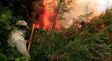 Declaran Alerta Roja para la comuna de Chillán Viejo por incendio forestal