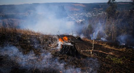 Incendios forestales en Galvarino afectan cerca de 500 hectáreas de vegetación