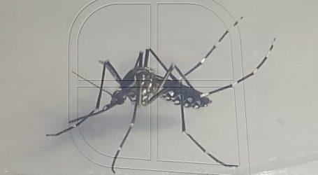 ISP confirmó 2 nuevos casos de dengue en la ciudad de Iquique