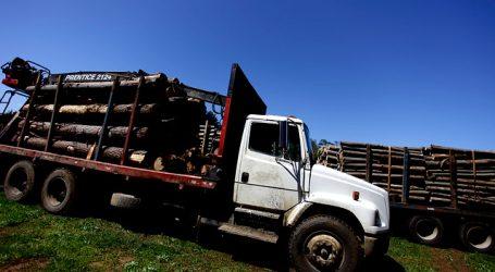 Navarro lamenta informe del MOP sobre restricciones en Ruta de la Madera