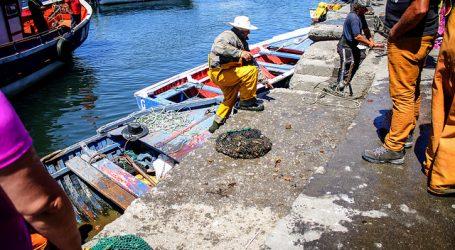 Trabajadores pesqueros presentaron recurso de protección contra la DT