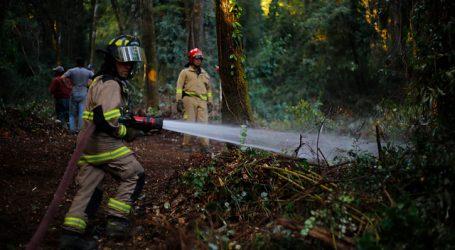 Declaran Alerta Roja para la comuna de Lumaco por incendio forestal