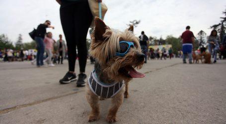 Piden eximir durante cuarentena restricción de permisos para pasear mascotas