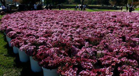 Banco de Chile celebró Día de la Madre con corazón de flores y concierto móvil