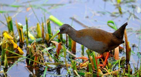 Humedal Angachilla: Un paraíso medioambiental en el centro de la urbe valdiviana