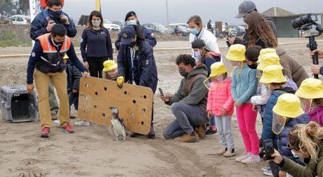 Sernapesca libera Pingüino de Magallanes en playa de Zapallar
