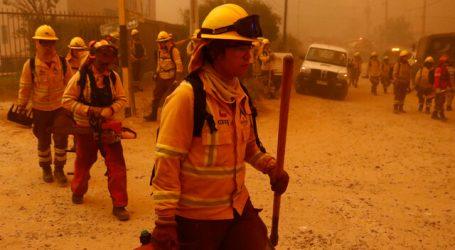 Ministerio Público inició investigación por incendio forestal en Quilpué