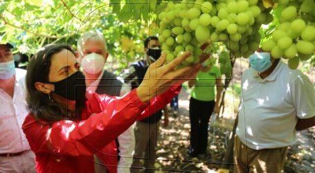 Declaran emergencia agrícola para las provincias de San Felipe y Los Andes