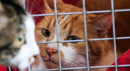 "Sernac abre consulta ciudadana sobre caso de alimentos ""Master Cat Gatitos"""