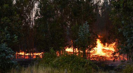 Alerta Roja para la comuna de Nueva Imperial por incendio forestal