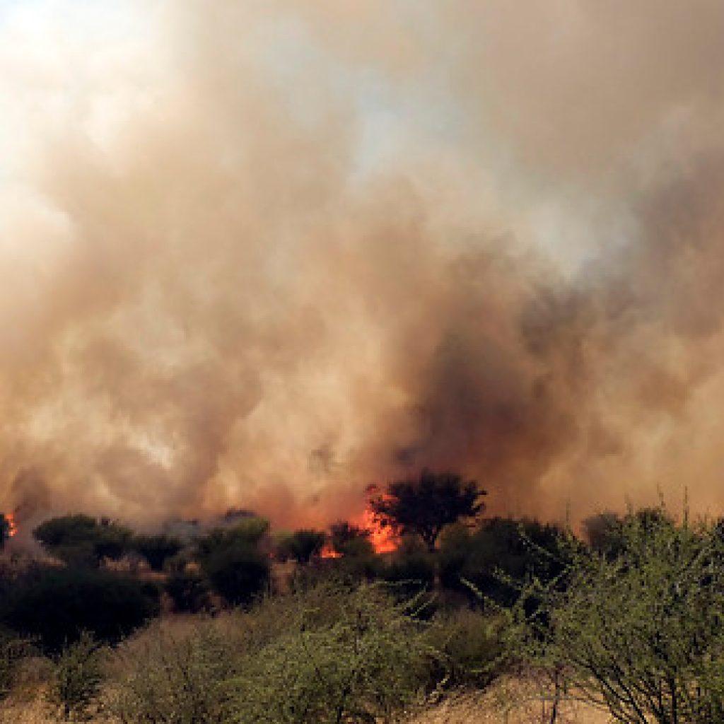 Se mantiene Alerta Roja para la comuna de Curacaví por incendio forestal