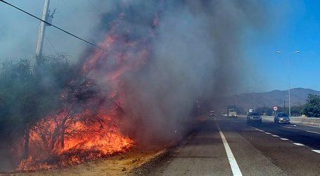 Tres personas resultaron detenidas tras incendio forestal en Curacaví
