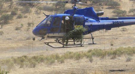 PDI incautó 8.546 plantas de marihuana en Petorca