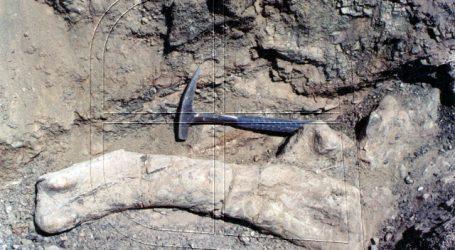 Arackar licanantay: Chile presenta una nueva especie de dinosaurio