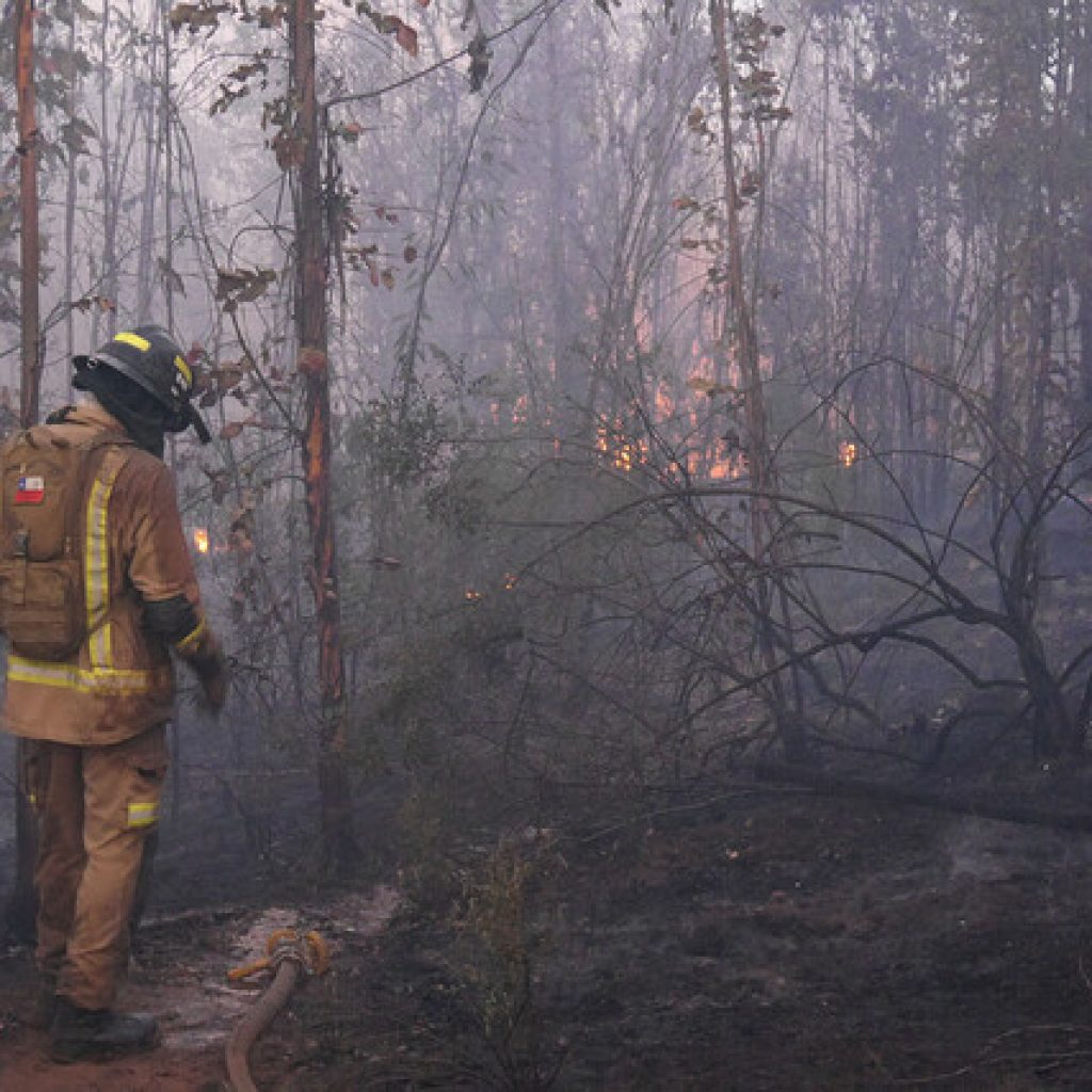 Temporada de incendios forestales dejó un 66% menos de superficie afectada