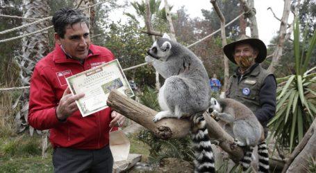 Subsecretario de Agricultura visita Buin Zoo y destaca campaña Padrino a Medida